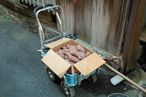 Cart loaded with sweet potatoes