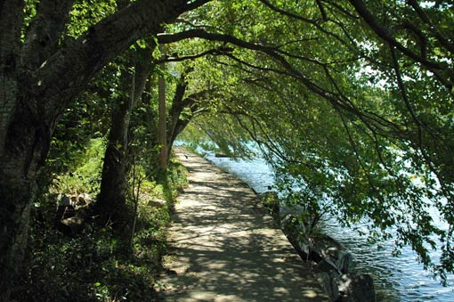Tunnel of trees along the shore