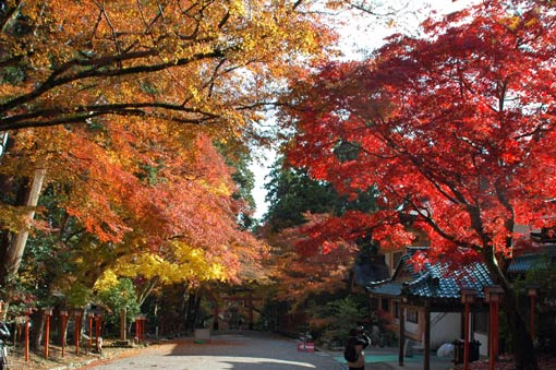 Colored maple trees branching over the approach