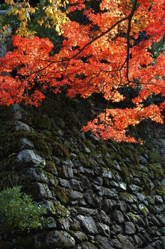 Autumn leaves and mossy stone wall