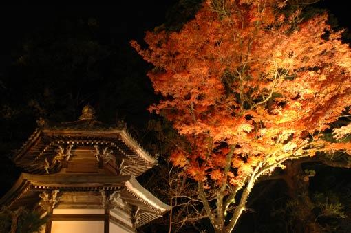 Illuminated Buddhist hall and blazing red tree