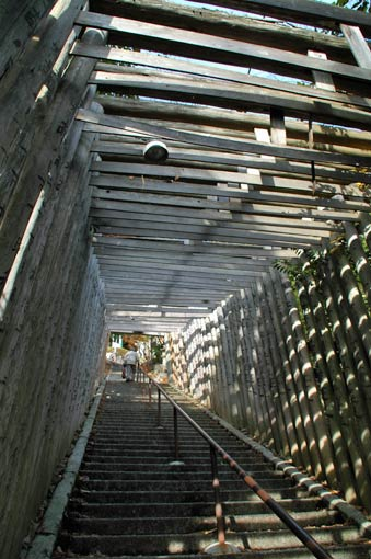 Tunnel of torii gates